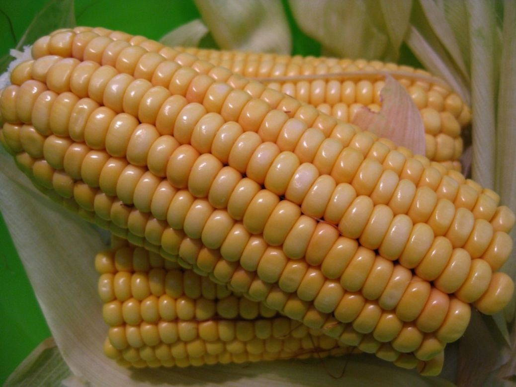 Corn trade for June 2014